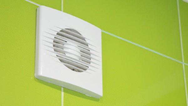 eliminar el moho de las paredes de forma permanente